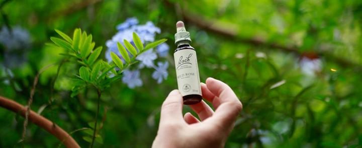 Flesje Bach Bloesem in natuur behorend bij de cursus Bach bloesemtherapie