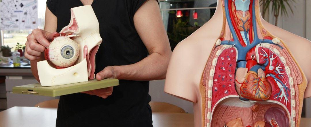Arts legt uit over de organen tijdens de opleiding Medische basiskennis CPION