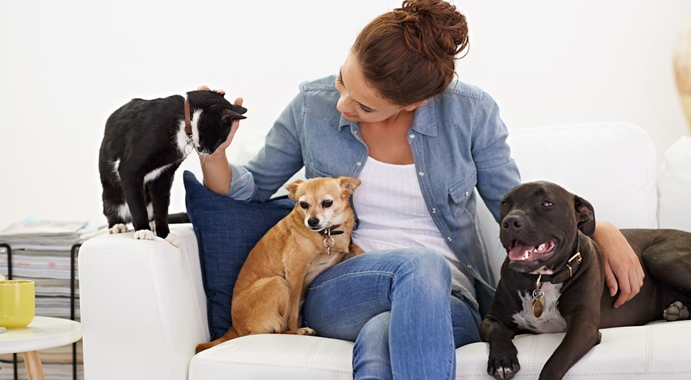 Gezondheid en gedrag bij hond en kat van Civas