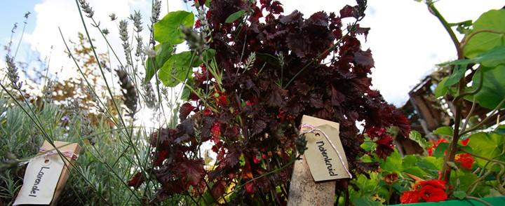 Kruidenplanten in de tuin als onderdeel van de cursus Kruidengeneeskunde
