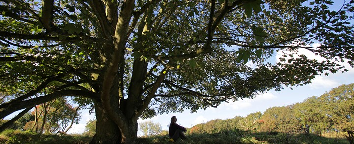 Vrouw zit onder boom tijdens de cursus Terug naar je natuur